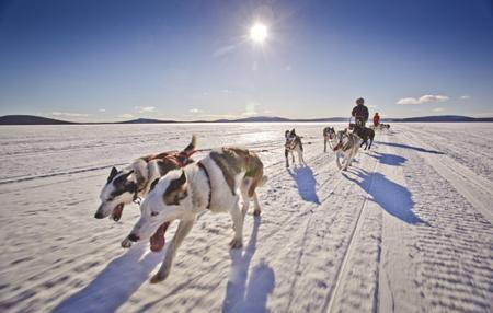 Fjallraven Polar - 330 km z psim zaprzęgiem