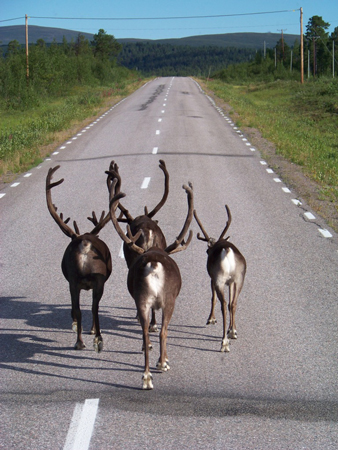 Fjallraven Classic 2011 - Częsty widok na szwedzkich drogach (fot. Jakub Rymowicz)